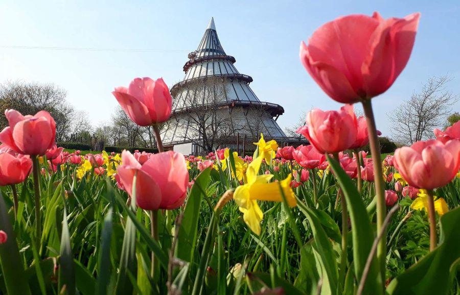 Der Jahrtausendturm im Elbauenpark. Foto: Katja Kraski-Küster
